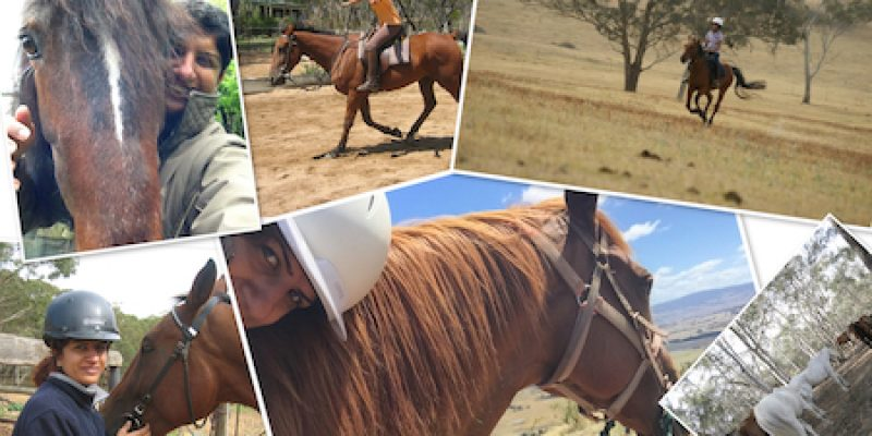 Horses Can Help you Heal
